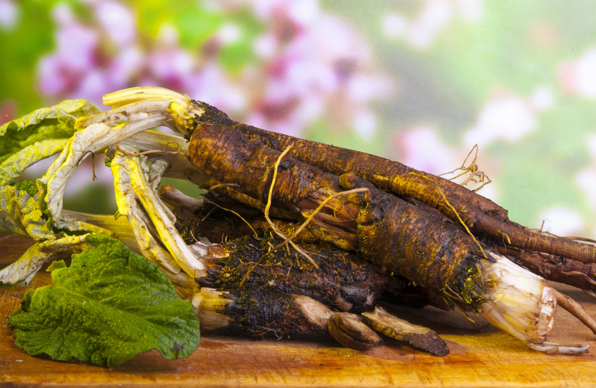 blood cleansing and detoxification herb burdoct root